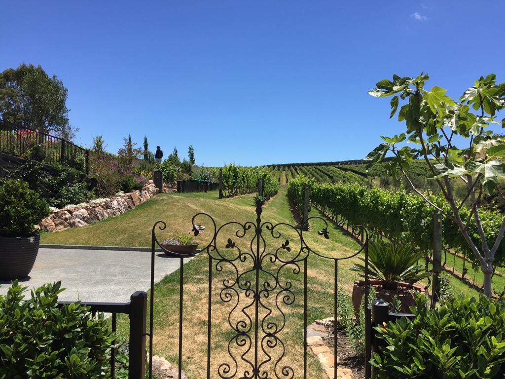 Tantalus Estate Vineyard